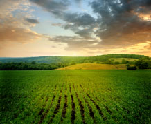 Farm Field Rows Shutterstock